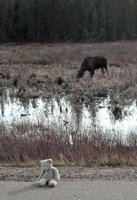 bear-moose-1