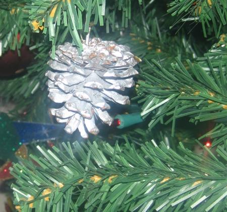 Pine Cone IMG_5898
