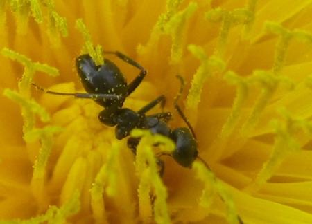 Flower IMG_2488